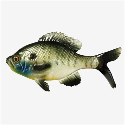 "The Gill - 5.25"" Swimbait"